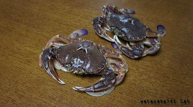 Crab_crab